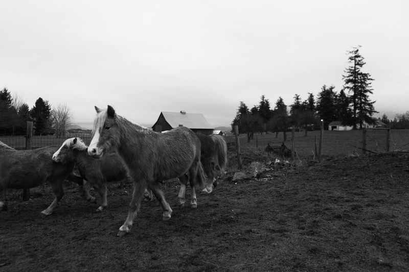 Photo of Herd of Horses on Farm