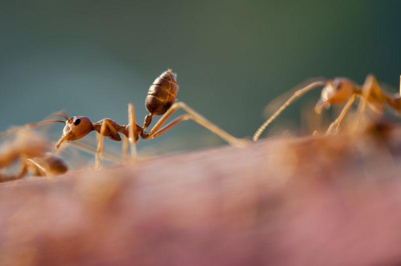 Photo of Ants Closeup