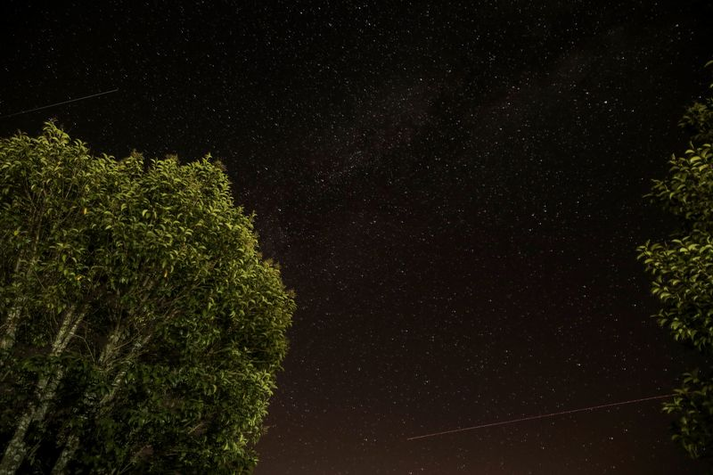 Photo of Trees Under Starry Sky