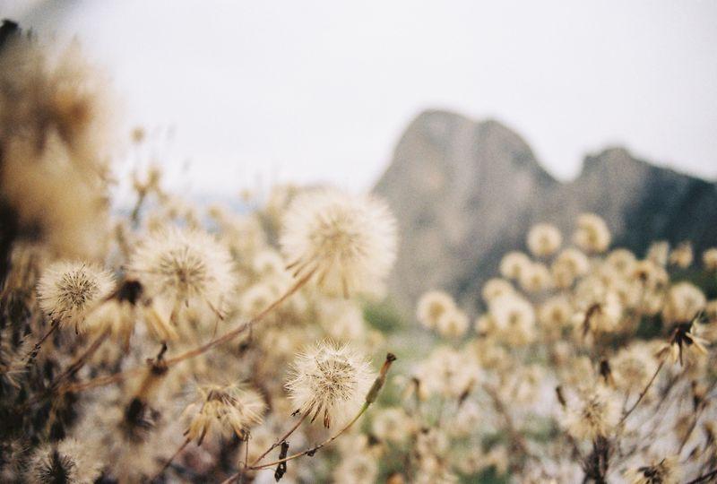 Photo of Wildflowersand Mountains