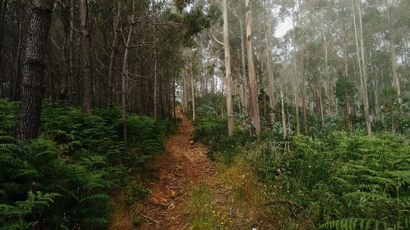 Photo of Trail in the Woods