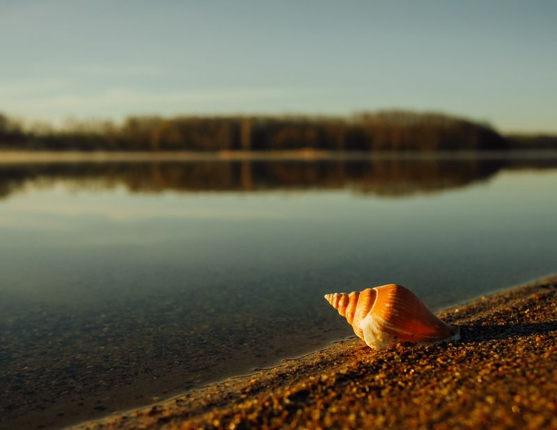 Photo of Seashell on Shore