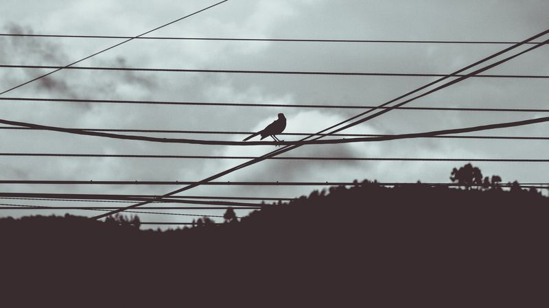 Photo of Bird on Wire Silhouette