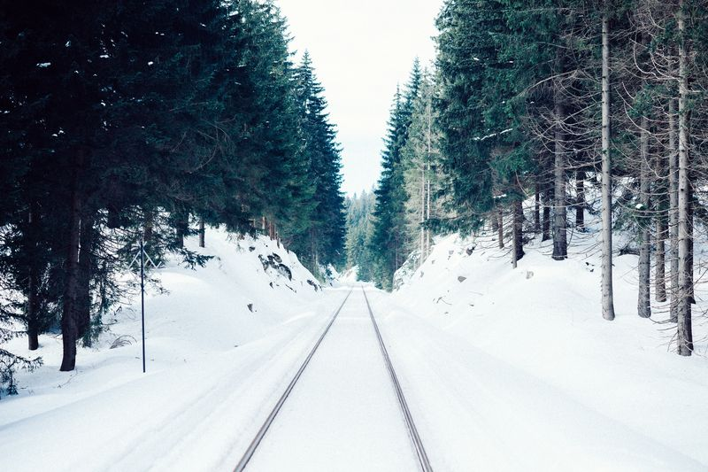 Photo of Tracks in Snowy Forest