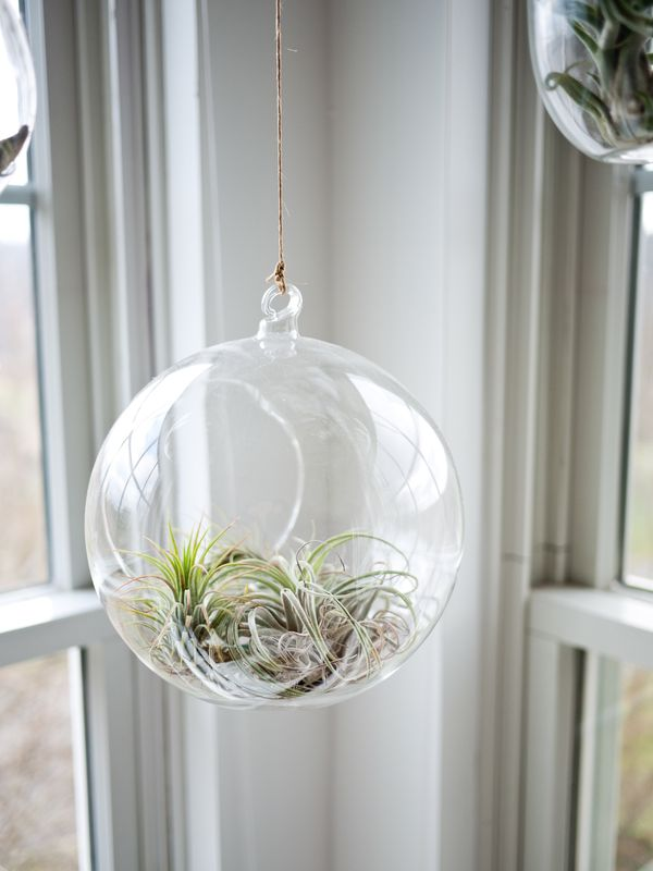 Photo of Plants in Glass Sphere