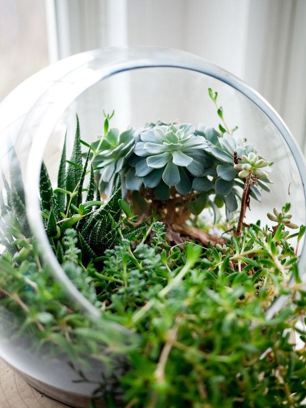 Photo of Plants in Bowl