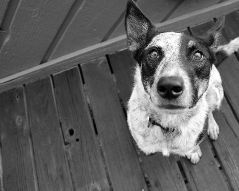 Photo of Dog Looking Up at Camera