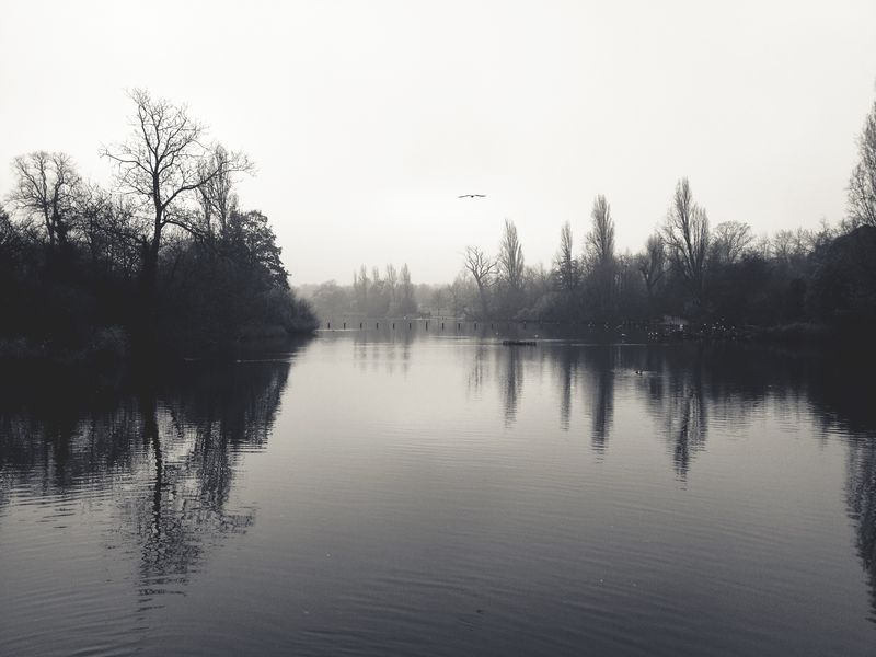 Photo of Lake with Trees