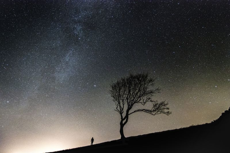Photo of Tree Under the Stars