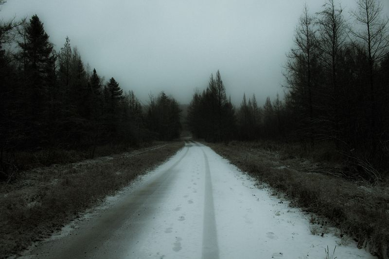 Photo of Snowy Forest Road