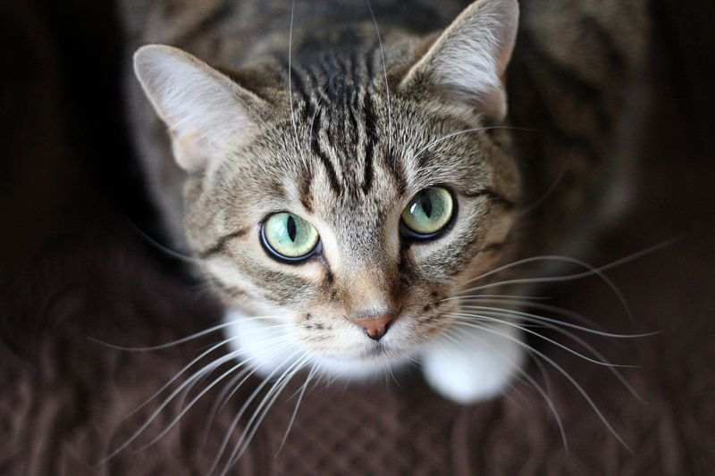 Photo of Cat Looking Up at Camera