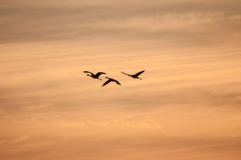Photo of Three Birds in Cloudy Sky
