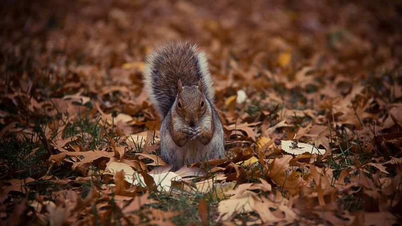 Photo of Squirrel Eating Nut