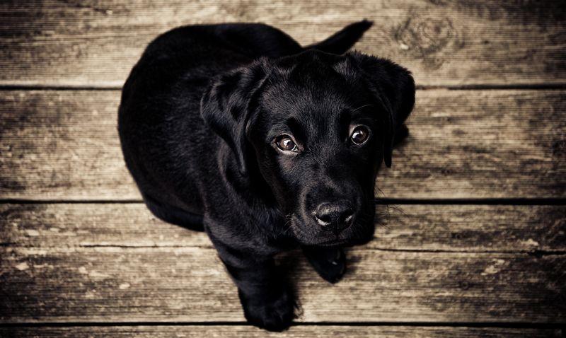 Photo of Puppy Dog Looking Up at Camera