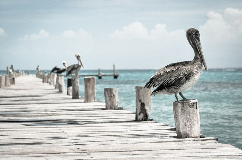 Photo of Pelicans Perched on Pier