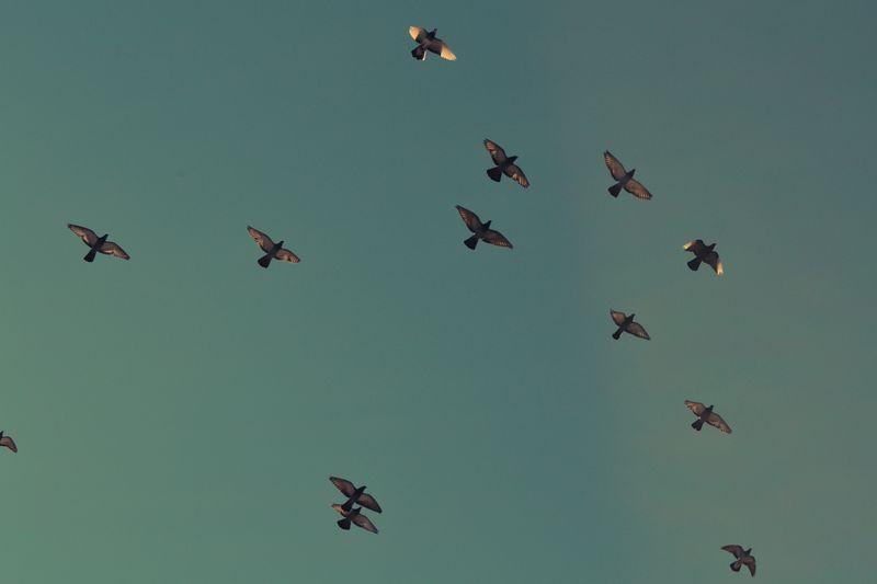 Photo of Birds Flying