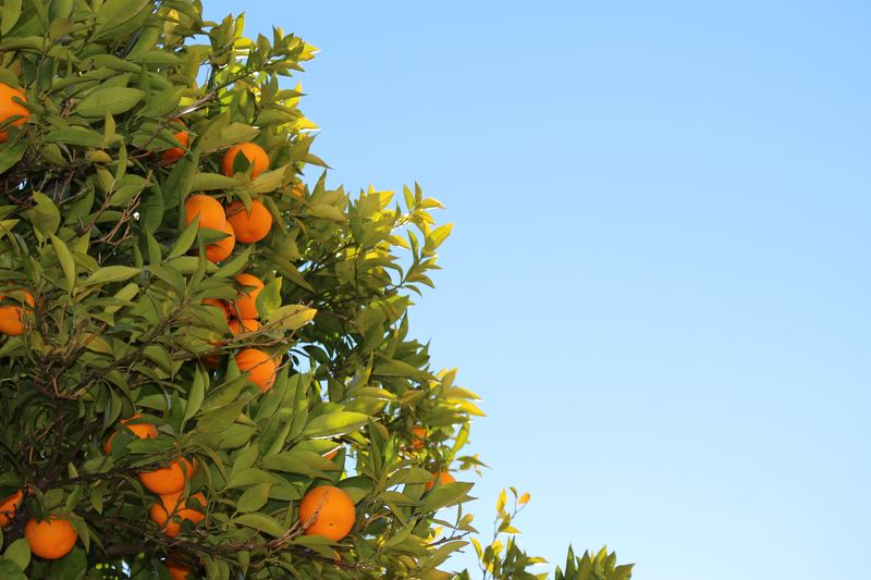Photo of Orange Fruit