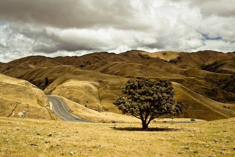 Photo of Grassy Hills