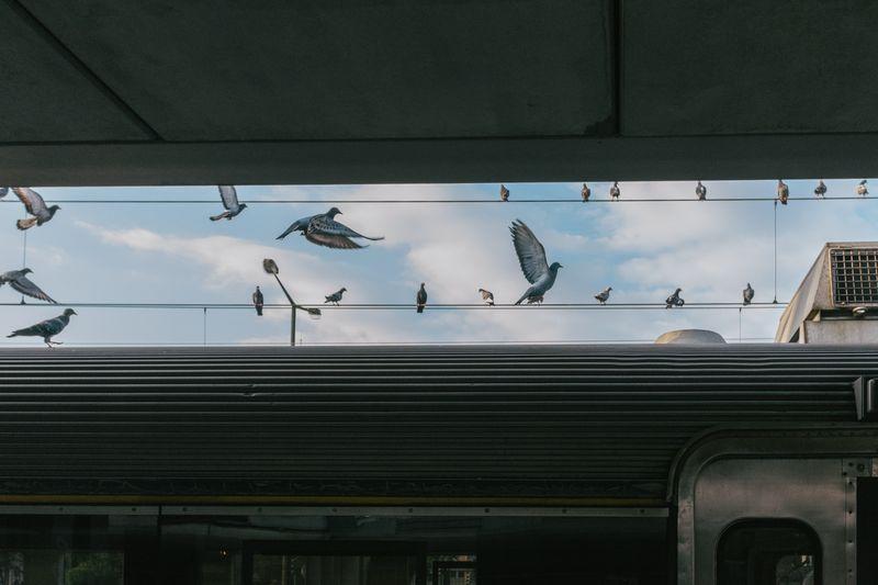 Photo of Pigeons