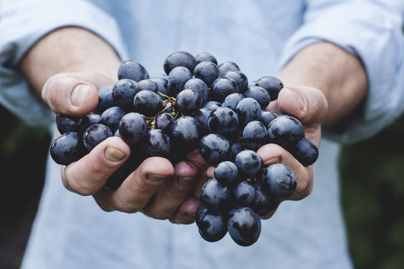 Photo of Person Holding Grapes