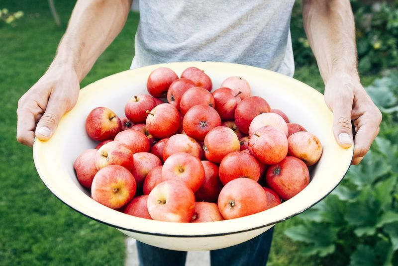 Photo of Bowl of Apples