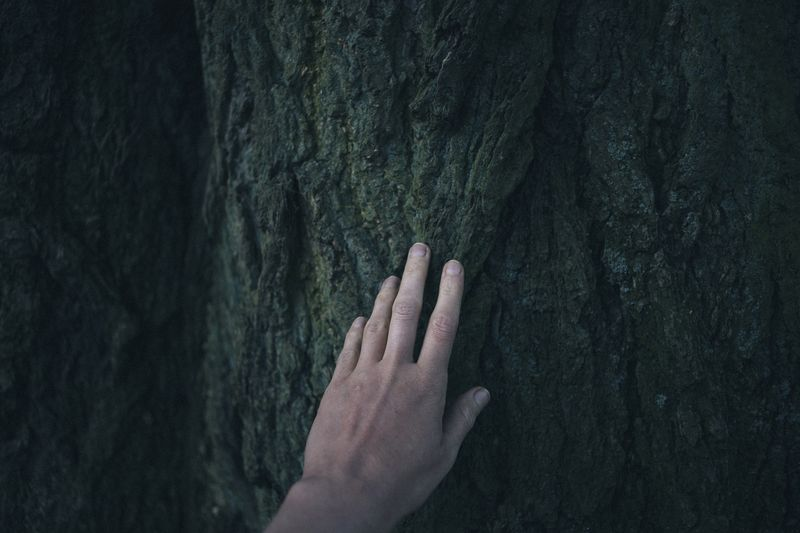 Photo of Hand Touching a Tree