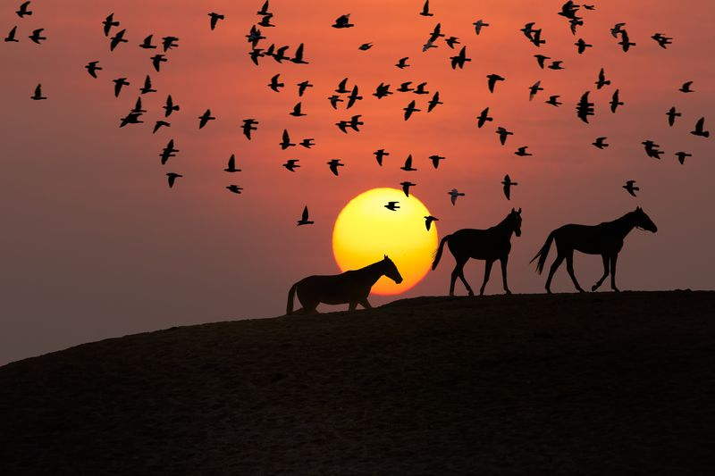 Photo of Horses and Birds Silhouette