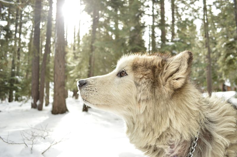 Photo of Wolf in Forest