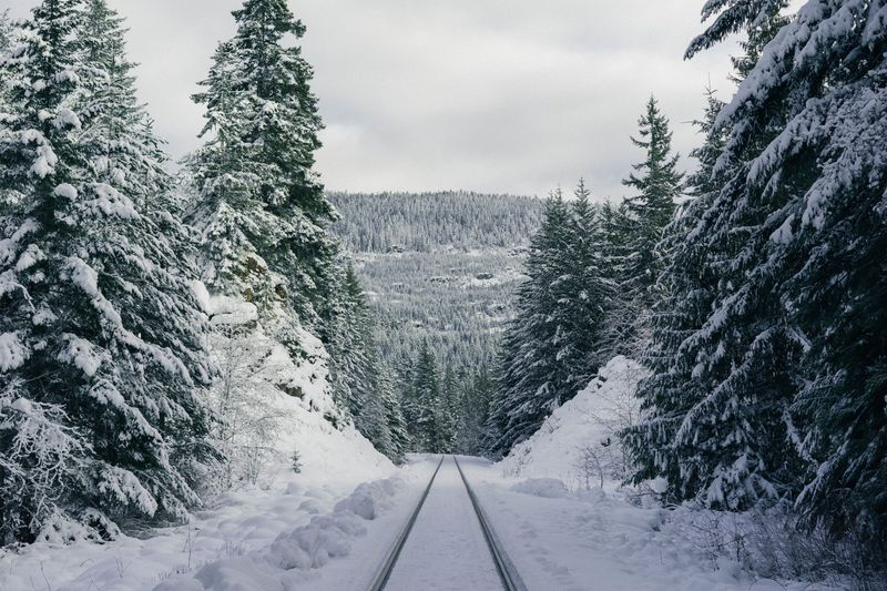 Photo of Snowy Path