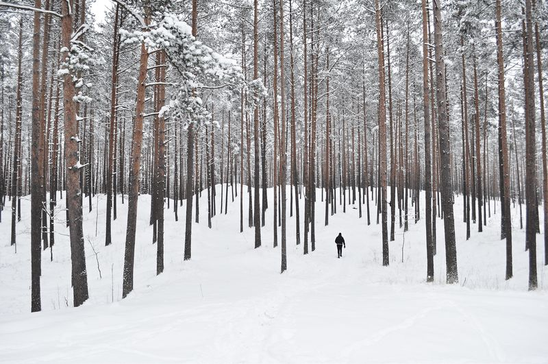 Photo of Person in Snowy Forest