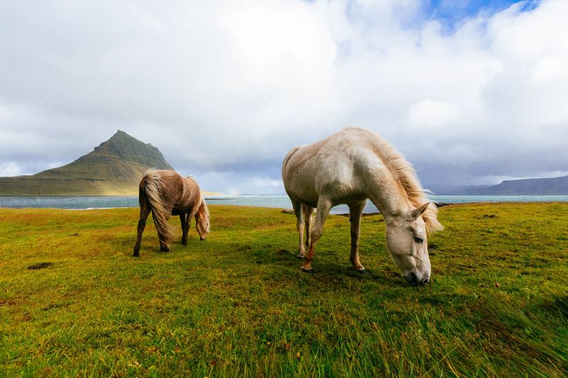 Photo of Horses Grazing on Grassy Shore