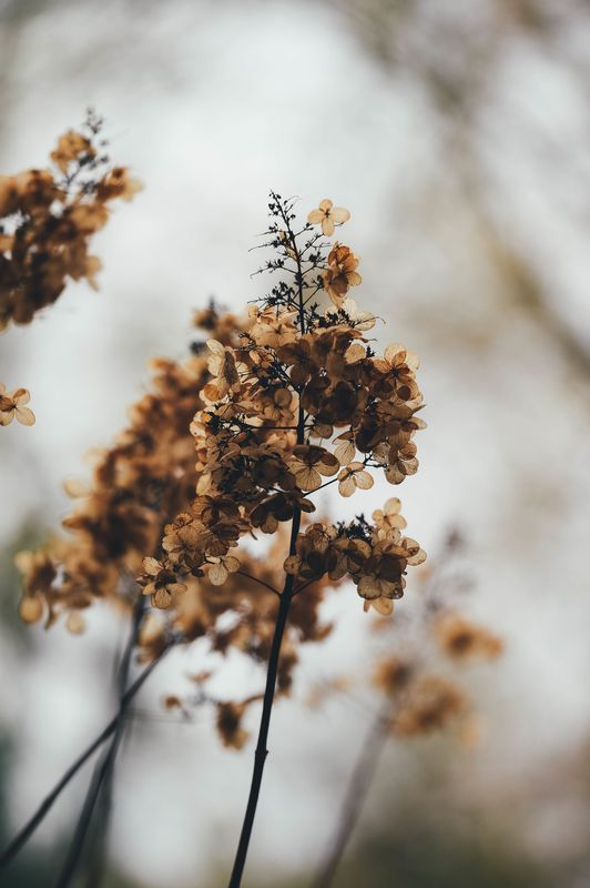 Photo of Wild Plant