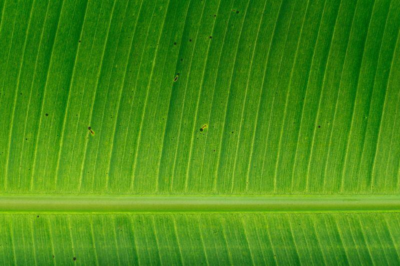 Photo of Leaf Closeup