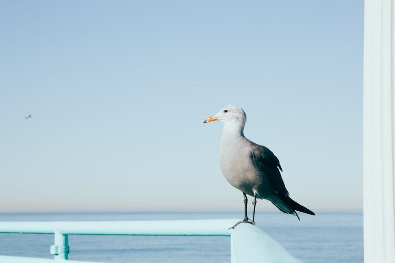 Photo of Seagull