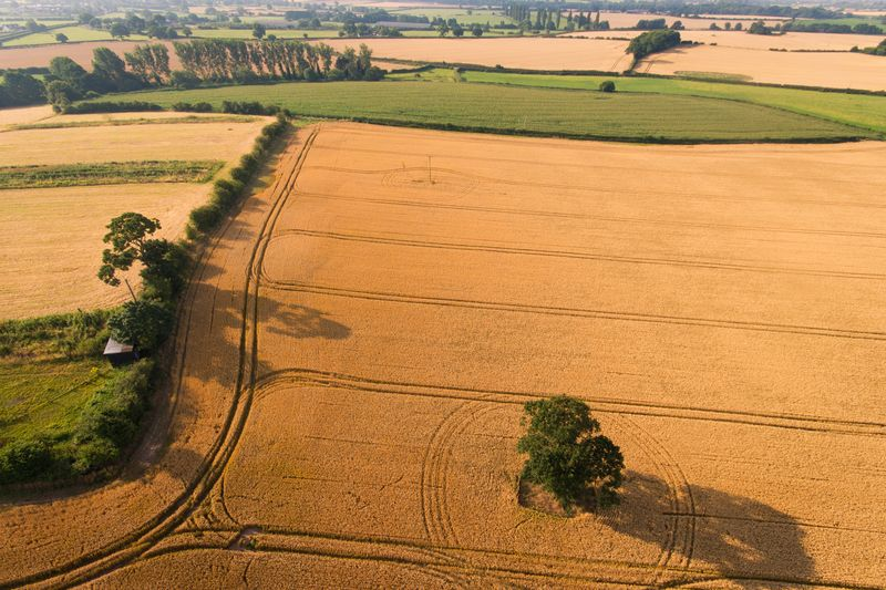 Photo of Farmland Fields with Trees