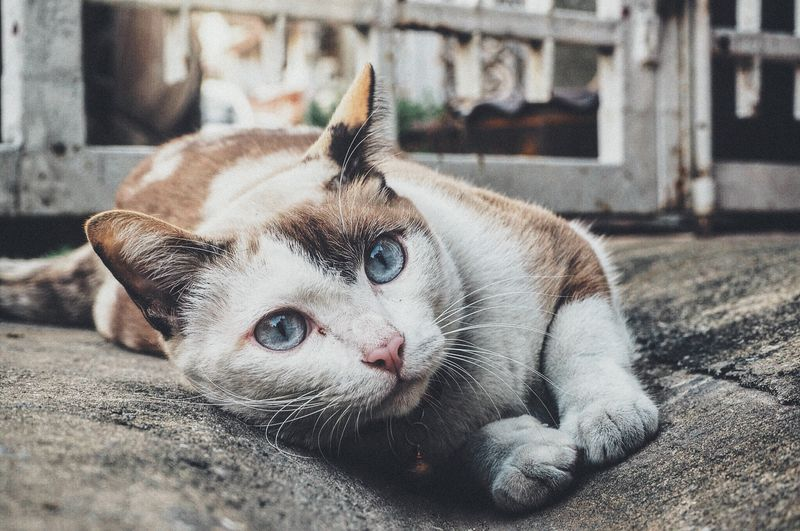 Photo of White and Brown Cat