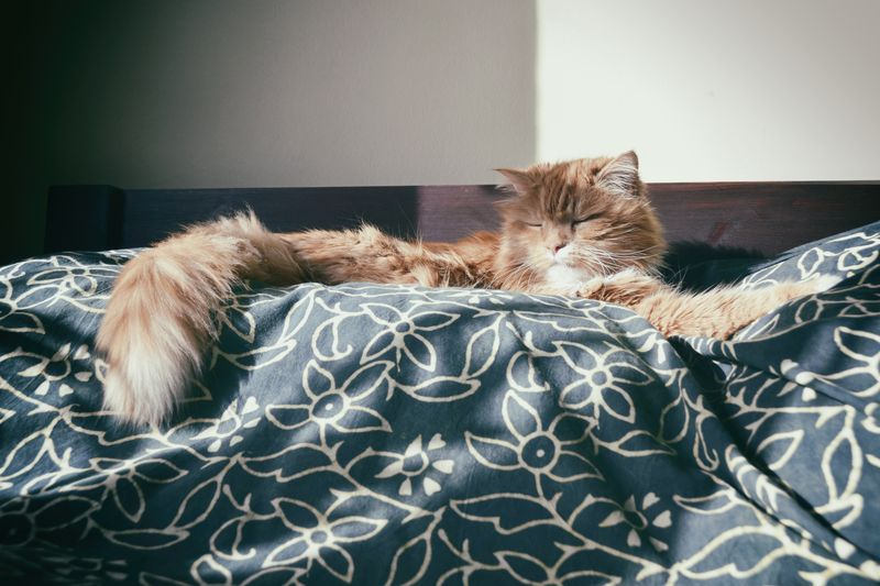 Photo of Cat Sleeping on Bed