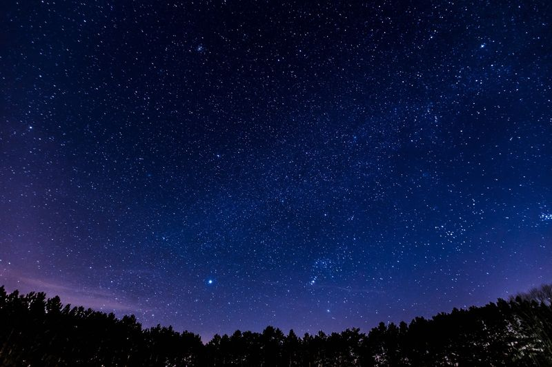Photo of Forest Under Starry Sky