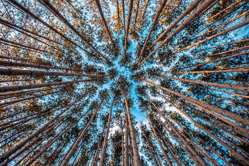 Photo of Looking Up at Forest Trees