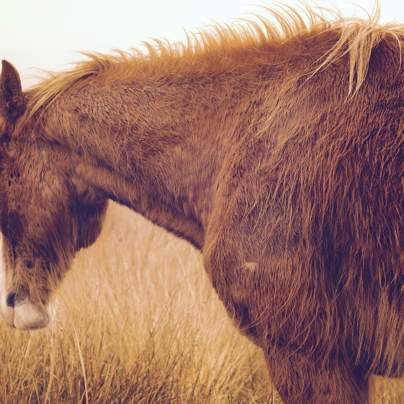 Photo of Horse in Field