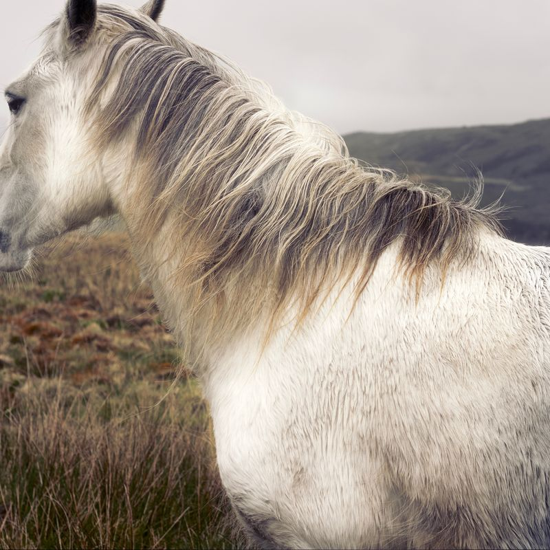 Photo of Horse Grazing in Hills