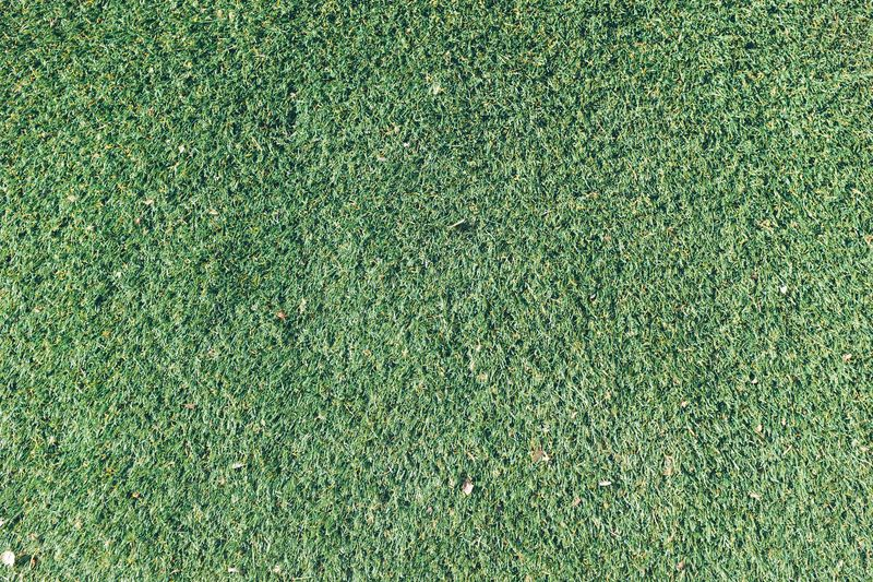 Photo of Grass Patch
