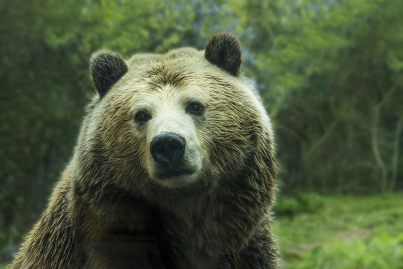 Photo of Brown Bear
