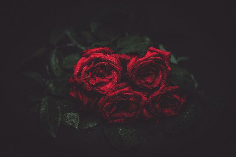 Photo of Rainy Roses