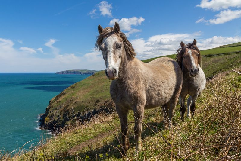 Photo of Two Horses on Coast