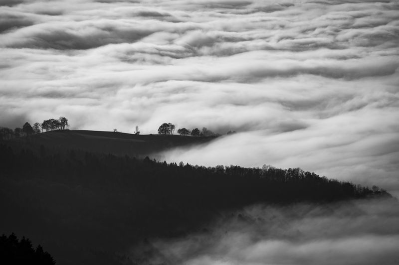 Photo of Foggy Hills and Forest