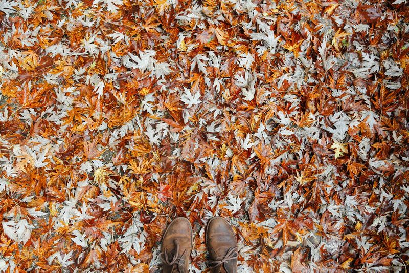 Photo of Shoes on Leaf PIle