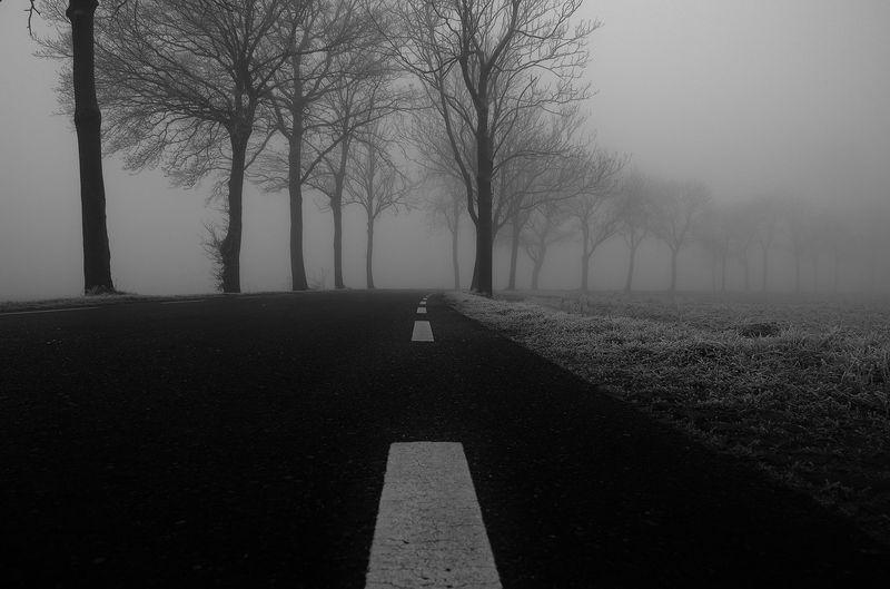 Photo of Foggy Road