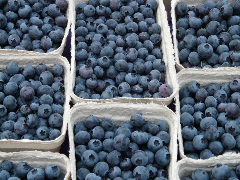 Photo of Boxes of Blueberries