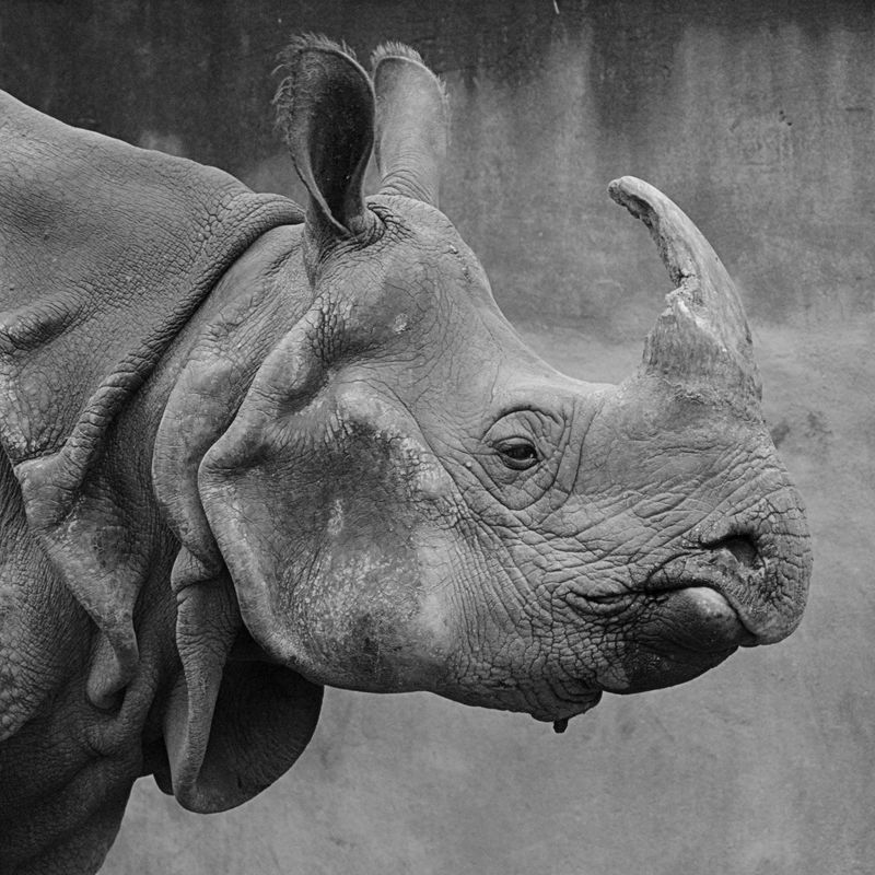 Photo of Rhinocerous